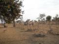 2012-Niger-villaggiopdf-24
