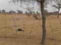 2012-Niger-villaggiopdf-40