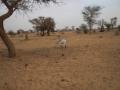2012-Niger-villaggiopdf-56