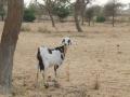 2012-Niger-villaggiopdf-57