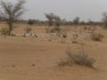 2012-Niger-villaggiopdf-69
