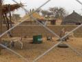 2012-Niger-villaggiopdf-87