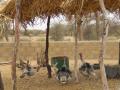 2012-Niger-villaggiopdf-94