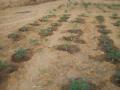 2012-Niger-villaggiopdf-98