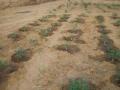 orticoltura in Niger