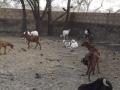 recinti animali 4