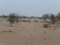 2012-Niger-villaggiopdf-70