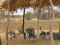 Niger-2012-7